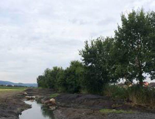 Bensheim: Am Mühl- und Mittelgraben wurde Rückzugsort für Tierwelt geschaffen