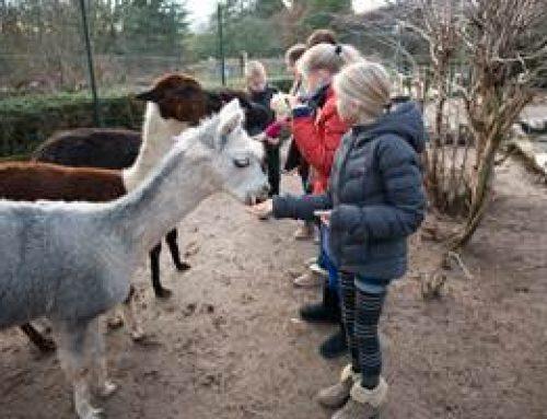 Heidelberg: tierische Zoo-Bewohner intensiv kennenlernen