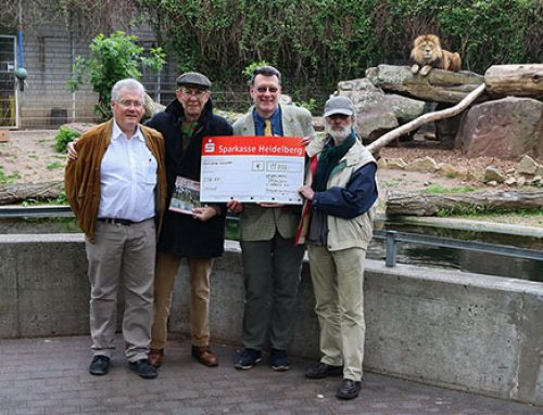 Zoo Heidelberg: Weitere Unterstützung für den Ausbau der Löwenanlage